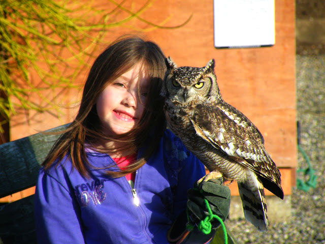 Falconry school tour